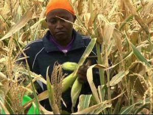 Farming in Turkana Kenya