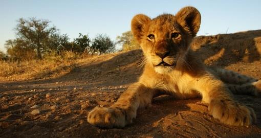 Africa's Scenic Beauty