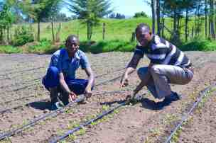 julius-farm-manager-drip-lines-2